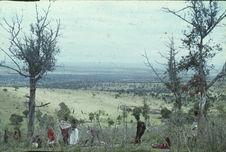 Sans titre [samburu parmi la végétation]